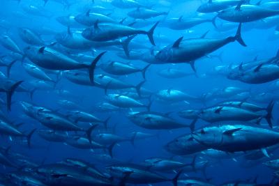tonijn